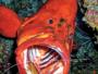 Quatrième Festival réunionnais de l'Image Sous-marine