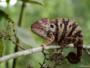 «Mandraka Park», véritable sanctuaire de biodiversité