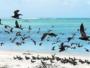 L'île Cocos, au coeur d'un site protégé