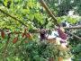 Un jardin raconté à travers les 5 sens