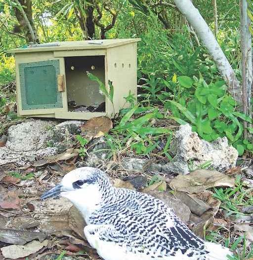 Projet Seabird: Rétablir les espèces d'oiseaux menacées