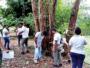 Maurice et La Réunion collaborent contre les termites