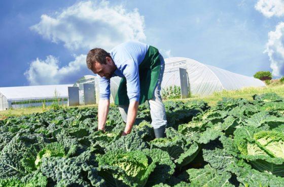 Les agriculteurs bio demandent une certification reconnue