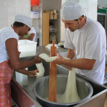 Fabrication artisanale de fromages: d'Italie à Maurice
