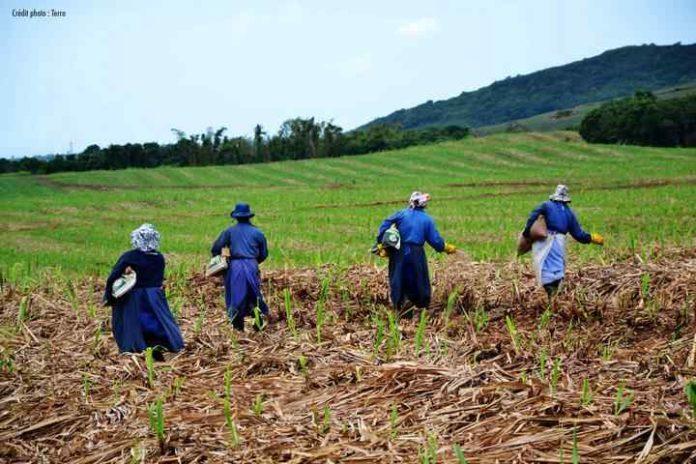 De l'industrie Sucrière à l'industrie de la canne à sucre à Maurice