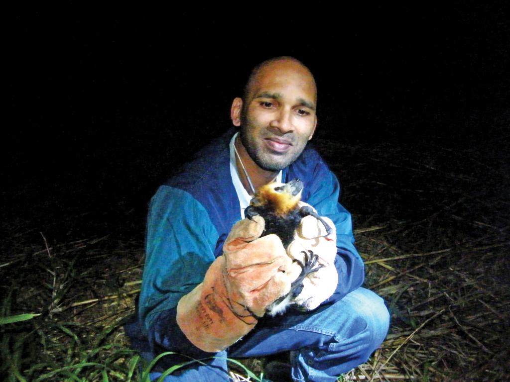 Vikash Tatayah : « L'abattage des chauves-souris est inutile »
