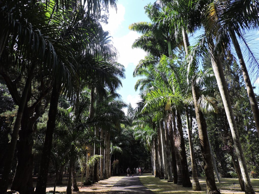Jardin de Pamplemousses : Voyage dans le royaume végétal