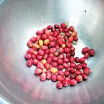 Les cerises cueillies10518_155537