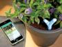 Les meilleurs gadgets tech pour un jardin connecté