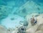 D.A.Y Marine au secours du lagon mauricien
