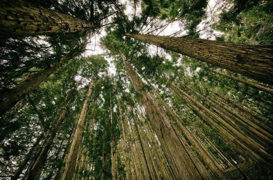 arbres plantés à Maurice