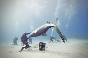 Des requins de récifs qui valent un million de dollars